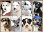 arrivaldogs16122013romania